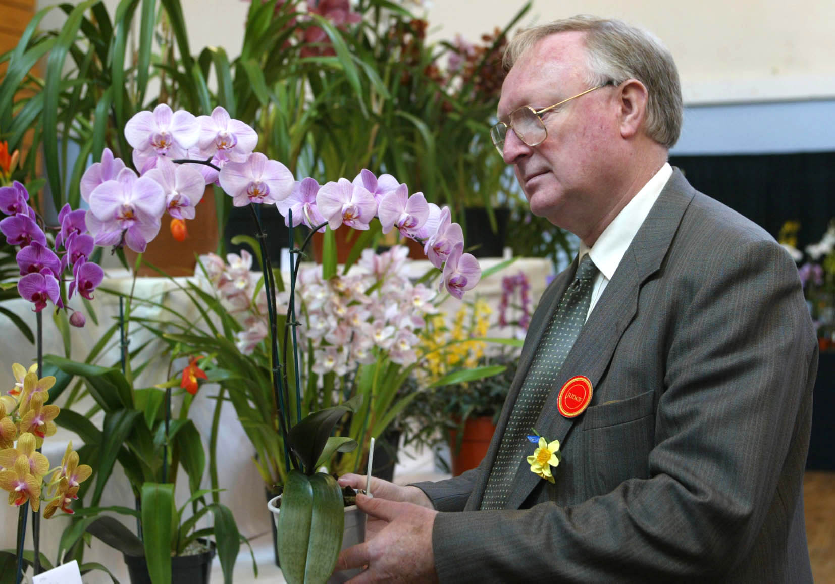 West Cornwall Spring Show - Barry Hampton travelled 120 miles from Exmouth to Penzance to judge the new orchid section of the show.